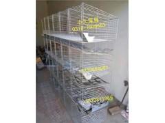 鸡鸽兔笼狐狸笼鹌鹑笼貉子笼宠物笼鹧鸪笼运输笼鸡笼鸽子笼兔子笼