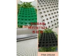 天津屋顶种植绿化排水板/车库顶板排水板多少钱一平方