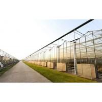 智慧农业温室大棚育苗室休闲观光温室大棚