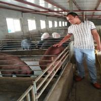 江苏德和种猪场供应优质太湖母猪苏太母猪批发