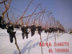美的庄园北冰红高级山葡萄红酒 集安冰葡萄酒 鸭绿江河谷冰葡萄 (6)