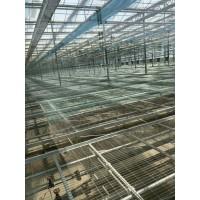 自动化育苗温室大棚  一道农业